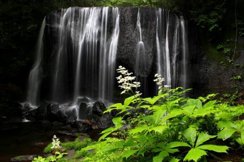 ☆達沢不動滝とヤグルマソウ<br /><br /><br />達沢不動滝は2007年のNHK大河ドラマ『風林火山』(内野聖陽主演・山本勘助役)のオープニング映像としても使われ、当時はあの美しい滝は山梨の何処にある滝ですか?と問い合わせが多かったそうす。<br />山梨が舞台の風林火山でまさか福島県の滝の映像が使われているとは、視聴者は思いもよりませんよね。<br /><br />※当時の映像<br />http://www.dailymotion.com/video/xyvu9u_%E9%A2%A8%E6%9E%97%E7%81%AB%E5%B1%B1_shortfilms<br /><br />↑滝の映像は中ほどに登場します。<br /><br />