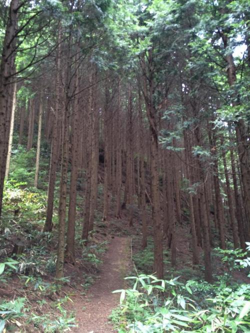 さて観光案内所などがある石見銀山公園の方へ戻ろうかな、と思っていたら遺産センターの裏に展望台があるらしい。展望台からは大森の集落を見下ろすことができるらしい。距離もそれほどないようなので、歩いていきますか
