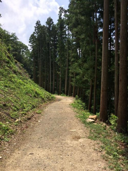 右側には杉林を眺めながら遊歩道を進む