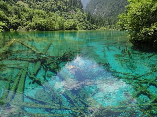 五花海<br />九寨溝で、一番きれいな湖だと思います。<br />とっても透き通ったブルーの水<br />湖底にある倒木なども、きれいに見えます。<br />