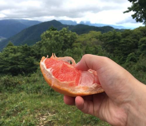 グレープフルーツうまい。<br />右上にちらっと琵琶湖が見えている。<br />比叡山山頂間近。