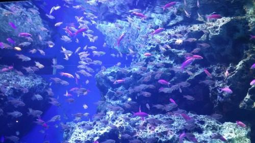 暑い夏には水族館はお勧めです。