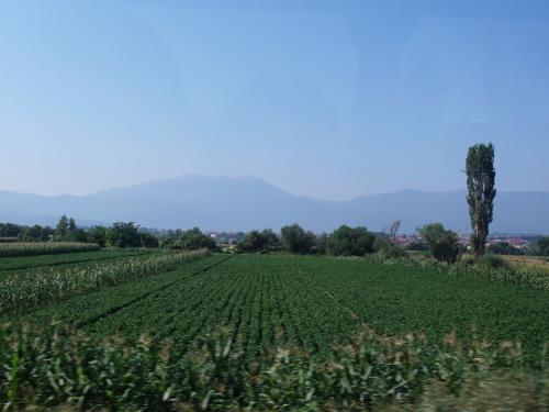 糸杉がみえると、イタリアを旅しているようです。<br /><br />コソボの主要産業は農業。続いて鉱業、観光。最近はITにも力を入れているそう。