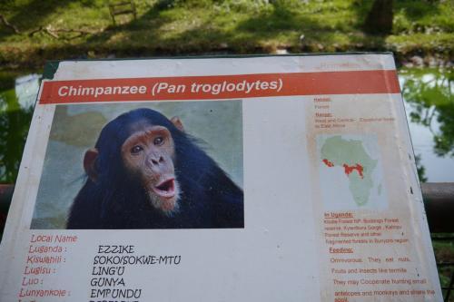 チンパンジーも飼育されています.