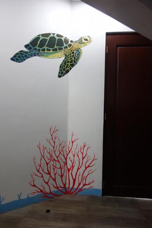 亀のお部屋。