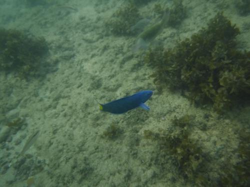 鮮やかな色の魚も見つけました!<br /><br />