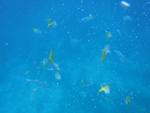 ジンベイザメだけでなく、こんな綺麗な色の魚もたくさん。<br /><br />餌が撒かれているから集まってくるのかな?<br /><br />
