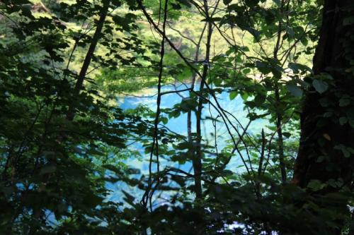 五色沼自然探勝路を暫く歩くと木々の隙間から青沼が見えてきました。