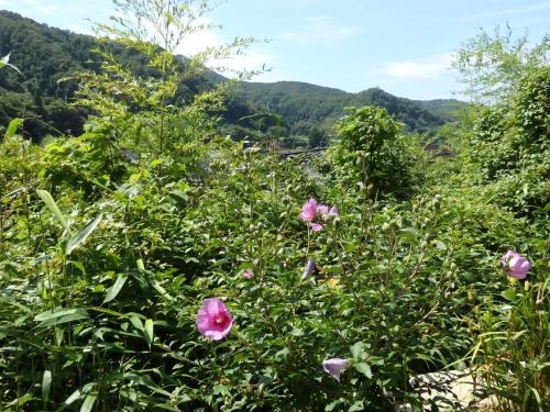 青空の下、ずっと向こうまで広がる緑の山々と草花。<br />なんだかのどかで、祖母の家を思い出した^^