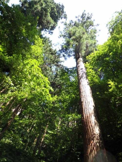奥之院へと続く石段は山の中に分け入っていく。<br />緑や木々は美しく神秘的でもあります。