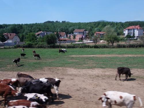 その先はまた平らな土地。<br /><br />牛がたくさん。