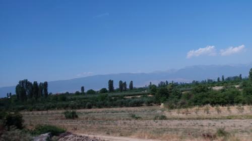 糸杉がある風景は、どこかイタリアを思わせます。