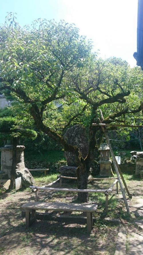 敷地内には菅原道真にちなんで梅が植えてあります