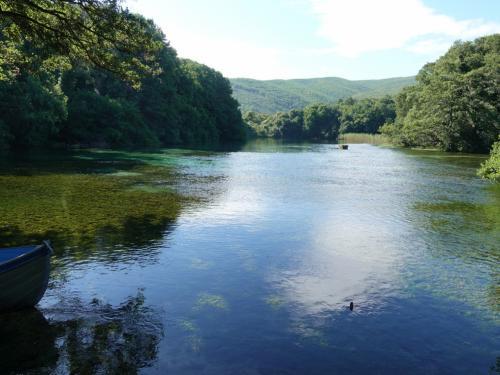 この池の奥から泉が湧き出しているのです。<br /><br />オフリド湖は氷河湖で、ヨーロッパ最古ともいわれる、古代湖のひとつ。200万~300万年前にはできていたようです。周囲の山から流れ込む地下水が湧き出しています。とても透明な湖です。