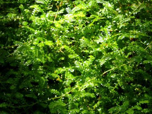 葉に水滴がキラキラしているのが綺麗だったが、、<br />なんだかよくわからない写真になってしまった(汗)