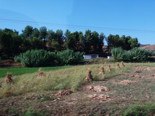 とうもろこしはちょうど収穫期。とうもろこしの藁を束ねたのを、あちこちで見かけました。