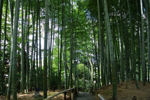 竹やぶ。このあたりは涼しい。