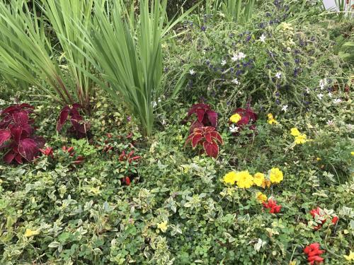 新千歳空港からトマムまでは高速を使って90分ほど。<br />途中、占冠パーキングエリアで休憩。<br /><br />小さなガーデンがあるのですが、お花がとてもきれいでした。<br />帯広にある有名な観光ガーデン、紫竹ガーデンが手掛けたガーデンです。<br /><br />あともうちょっとでトマムです♪♪