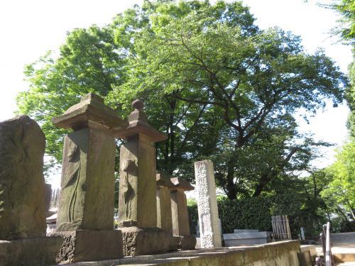 階段を上り終えると<br /><br />暑すぎずすがすがしい晴天の朝は、なにげない景色が輝いて見えます。<br /><br />あとで了源寺の公式サイトを確認して、これらの墓石が赤穂義士ゆかりの軽部五兵衛家の墓碑ではないかと気付きました。<br />