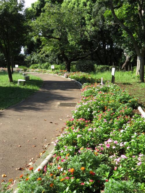白山古墳公園の花壇<br /><br />ニチニチソウがカラフルに咲いていました。<br />手入れをしているのは地元の中学生のみなさんです。<br />