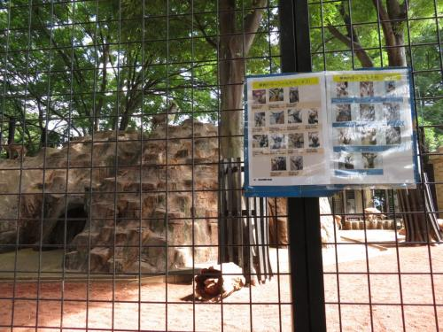 レッサーパンダ展示場の隣のマーコール展示場<br /><br />高い崖のような険しいところを好むヤギの仲間のマーコールのために、岩山があります。<br />