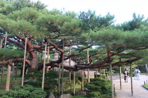 やはり金沢といえば兼六公園。定番の一つ位は行っておかないとね。