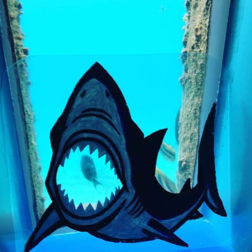 サメに食べられる(● ˃̶͈̀ロ˂̶͈́)੭ꠥ⁾⁾