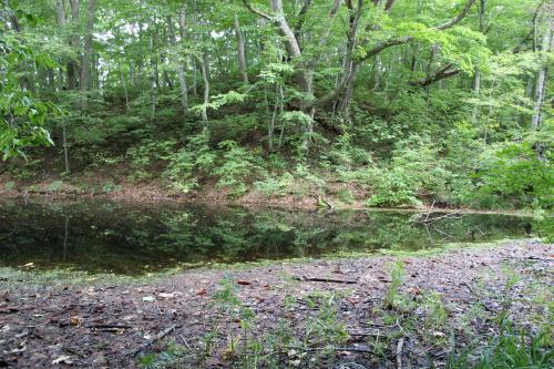 ひょうたん池までで、戻ってきました。(*_*)<br />