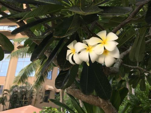 ホテルに戻ってきました。<br /><br />水着に着替え<br />プールへレッツゴー!<br /><br />プルメリアのお花って<br />南の島にいる!って気持ちにさせてくれますよね^ ^
