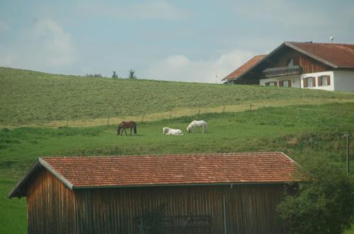 車窓からのどかな牧場が見える。