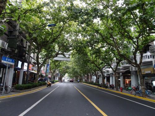 走行中プラタナス並木がきれいな通りを発見したり