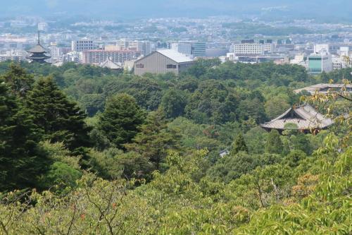 翌朝は若草山へ少し登ってみようかと出かけます。