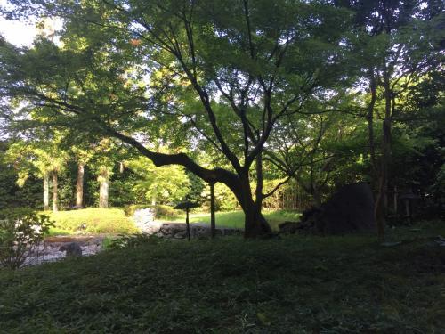 朝食会場から見えるお庭。落ち着いていて緑が気持いいです。