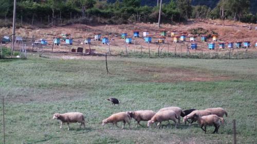 ミツバチの巣箱をたくさん見かけました。羊もね。<br /><br />ロガラ国立公園です。