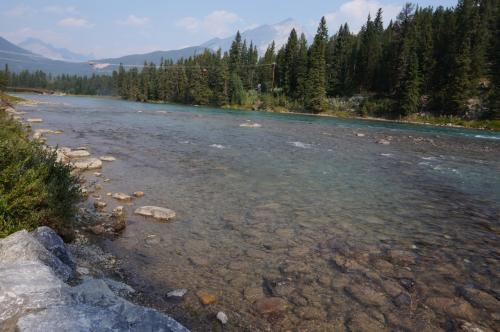 滝の上はまた穏やかな水の流れに。<br />この水は昨日水面にさざ波を立ててしまったあのボウ湖から流れてきているのだ。<br />更に何億年前からの氷河の水も交じっているかと思うと感慨深い。