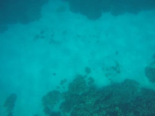 最終日もまたビーチ。ホナウナウ国立歴史公園の隣にある2step beachに行きました。ココはビーチというか、砂浜はありません。溶岩、即海ってトコでしょうか。だから深いです。でもハワイ島で行ったビーチの中で、一番透明度が高かったです。写真見えづらいですが、海底20mくらいのトコに「ALOHA」とブロックで書かれています。ボンベを背負ったダイバーさんが、たまにキレイに見えるようにしてくれます。ココ1箇所かと思ったら、もっと近場の海底5mくらいのトコにもありました・・・