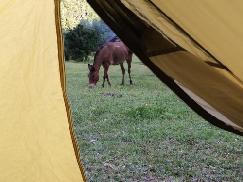 1日目キャンプ地は放牧地<br />トレイルを牛馬が通るので、所々荒れていてここまで来るのにかなり消耗する