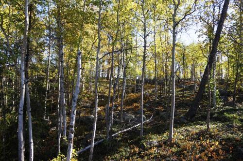 3日目、この日はオーロラビレッジの開催するキャメロン滝ハイキングに参加しました。<br />黄葉の中を歩きます。意外とアップダウンがありました。