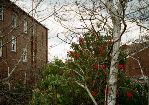 ブルーマウンテンズで宿の近辺を散策してたら、赤いお花が鮮やかだったので。