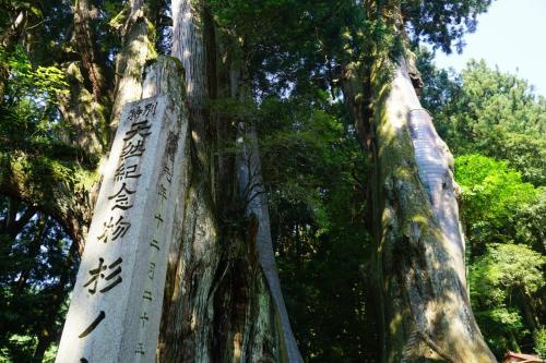 樹齢3000年は伊達ではありません。