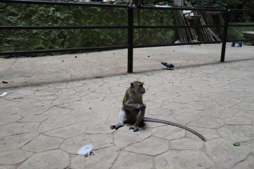 えっと・・・先月はお金使って、わざわざ猿を見に行きましたよ。 <br />が、ここ、駅に着いた時から、大量の猿にビビってたけど、頂上?はもう異常です!<br />便乗した地元ジイさんが餌を観光客に売ってるし、猿が懐いちゃって、人が持っている食べ物を狙うので、あちこち猿だらけ(T_T)
