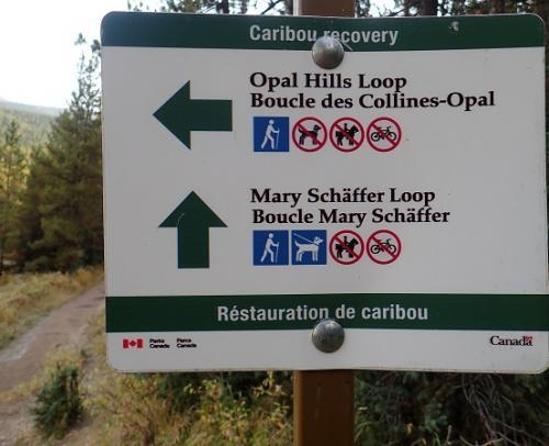 数分歩くと、分岐となります。。。<br />太い道に引き込まれないように、左に行きましょう!!