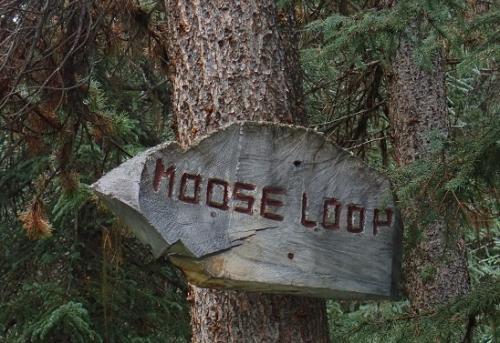 ムース! Moose! むーす! <br />迷うことなく進めます。。。