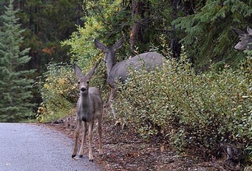 そーっと車を止めて待っていたら、小鹿も出てきました。。。<br />しばし、鹿を眺める・・・<br />この時間が、次の遭遇を呼んでくれました。。。