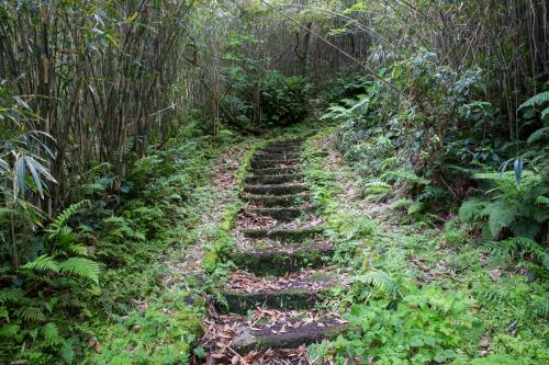 急坂を登る。レンタカー屋さんに青ヶ島には蛇はいないと聞いていたので、安心して登る。