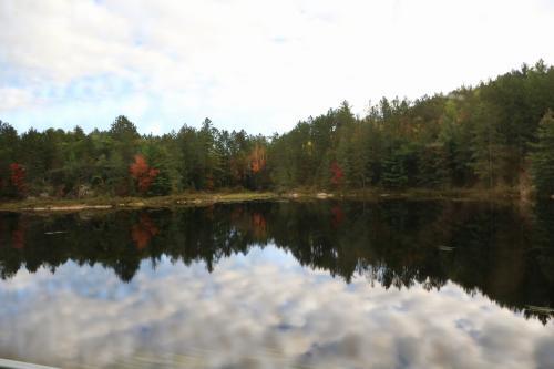 このあたりは小さな池が多く、そこにはビーバーボンド(堰き止めたダム)があるとのことで、一生懸命探しましたがなかなか見つかりません。