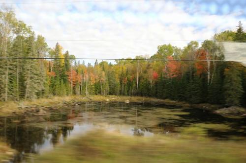 この写真ではよくわかりませんが、この池にビーバーボンド(堰き止めたダム)がありました。
