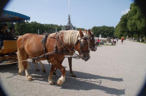 何かを待っている人たちは、馬車が来るのを待っていたのだった。馬には申し訳ないが、元の場所まで歩くとかなりあるので、私たちも帰りは馬車に乗りたいと思った。