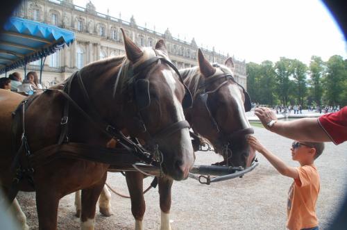 馬車を引いている馬には、触れることができる。
