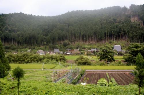 かやぶきの里 美山町北村<br /><br /> 彼方此方に、ポツリポツリと「かやぶき屋根の家」が見えてきました・・・「フランスの最も美しい村教会」を真似て、日本にも「日本の最も美しい村連合」と言うのが有るらしいですけれど・・・全部で、60くらいの村や町が加盟しているらしい・・・でも、此処「美山町」は、別に、そのメンバーに入っているというわけではないらしい・・・有名なのにね・・・てっきり、入っているモノと思ってました・・・